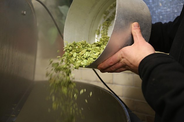 pouring hops into brew kettle