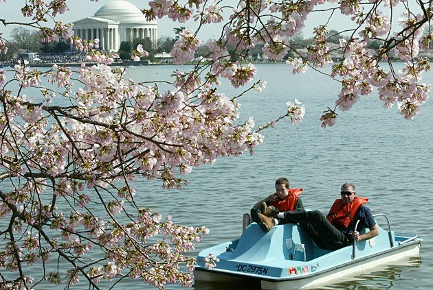 Washintgon, D.C. Cherry Blossom Festival
