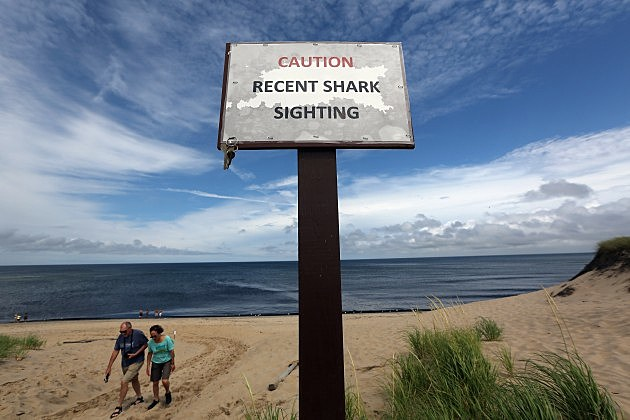 shark sighting sign in Cape Cod