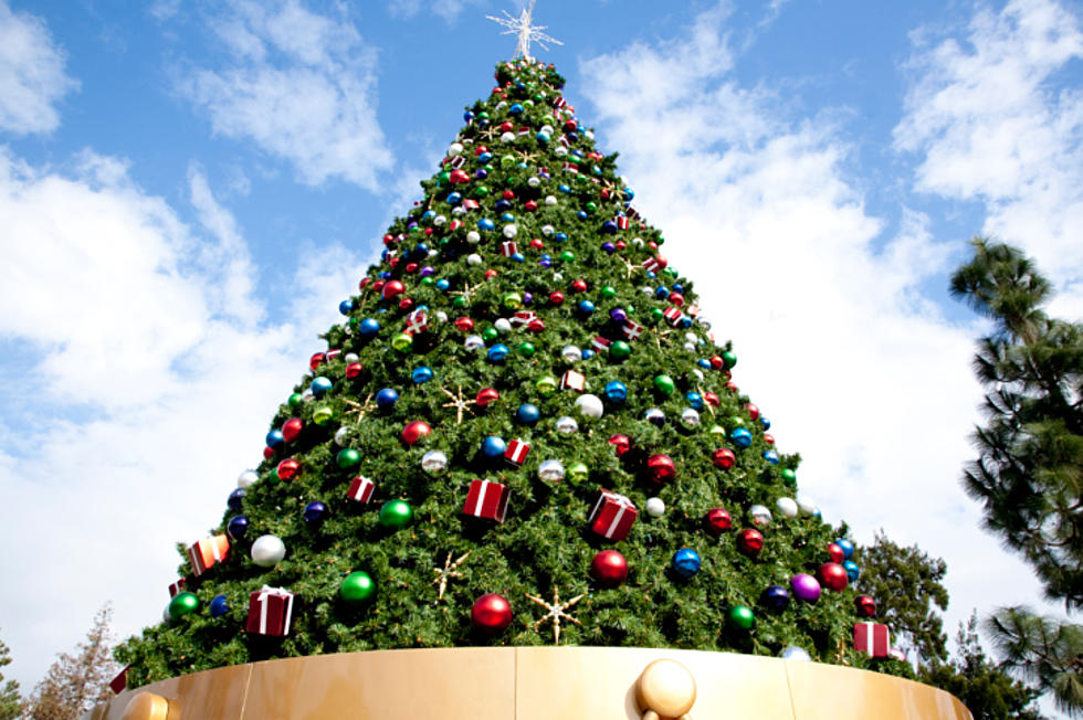 will you buy your fresh cut christmas tree from amazon - Christmas Tree Amazon